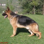 aslan-belona-velika